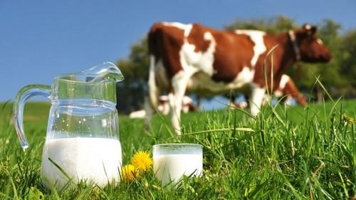 Bột sữa non Colomi 1