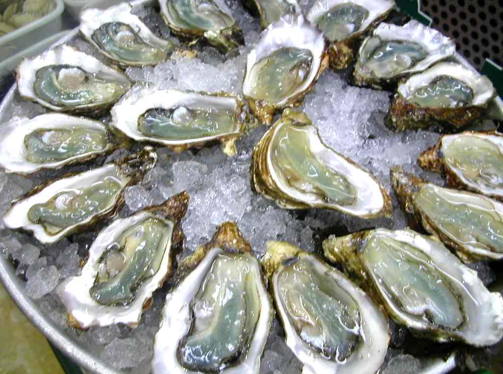 OYSTER PLUS 1