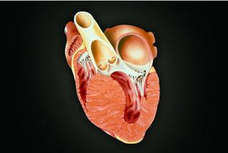 Bệnh cơ tim 1