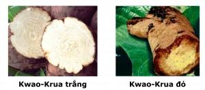 1. Có nhiều loại Kwao Krua, hãy chắc chắn bạn sử dụng đúng loại 1
