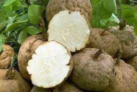 3. Có sự khác biệt giữa Kwao Krua Trắng trong tự nhiên và Kwao Krua Trắng trồng thành vùng nguyên liệu. 1