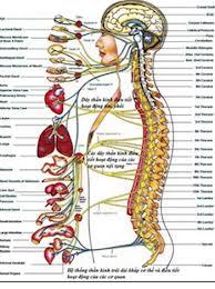 Biến chứng thần kinh do tiểu đường 1