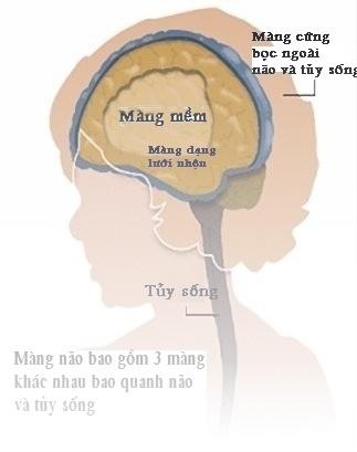 Những điều bạn nên biết về bệnh viêm màng não 1