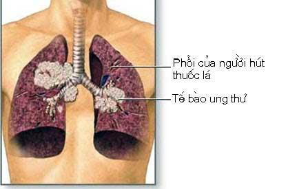 2. Khói thuốc lá 1