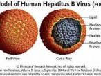 Virut-HBV