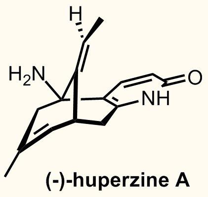 Tác dụng của Thạch tùng thân gập trong điều trịAlzheimer 1