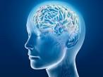 Quan niệm sai lầm về bộ não