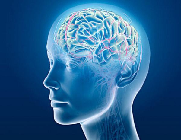 Sai lầm khi nghĩ não to thông minh hơn