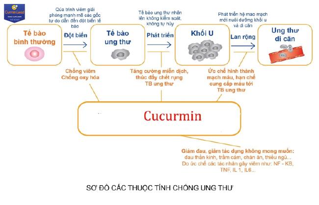 Công dụng chống ung thư của Curmin Lead